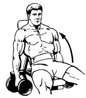 Как накачать бицепс в тренажерном зале