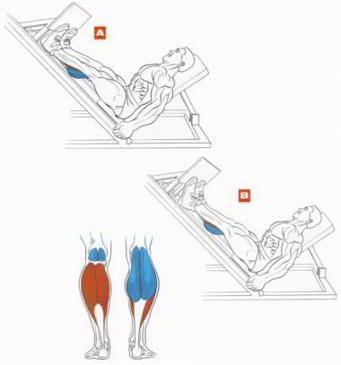 Качаем мышцы голени в спортзле