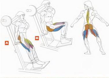 Качаем мышцы голени в спортзале