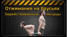 какие группы мышц работают на брусьях