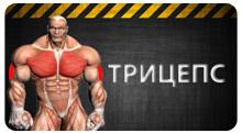 Трицепс - упражнения и особенности тренировки
